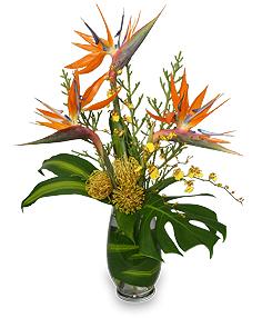 Modern & Tropical Flowers