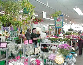 Wholesale & Retail Flowers