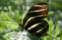 Beautiful Butterfly Ready For Release