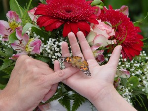 Wedding Butterflies