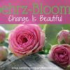 Behrz-Bloomz: Change Is Beautiful
