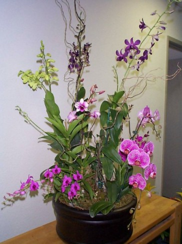 Wedding Party Photo Gallery Orchid Arrangement
