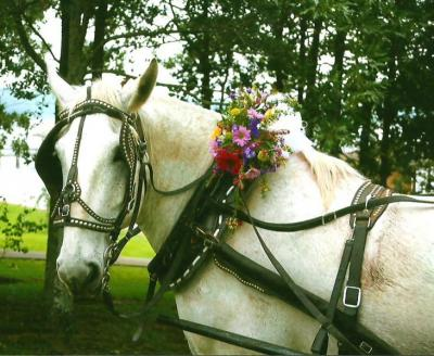 Beautiful Wedding Flowers On The Horse